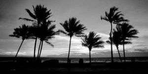 Sunrise Palms by Harold Silverman