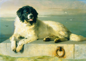 A Distinguished Member of the Humane Society by Sir Edwin Henry Landseer