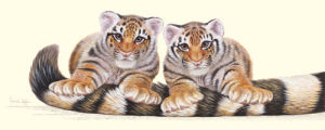 Stripes by Warwick Higgs