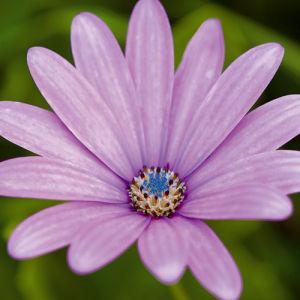 Fleur I by Joseph Eta