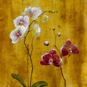 Orchid Bloom II by Georgie