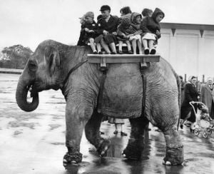 Elephant ride, Belle Vue Manchester 1957 by Mirrorpix