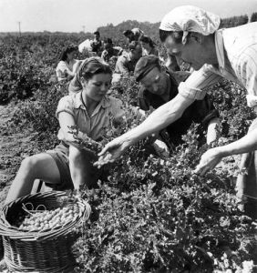 Volunteer farm workers, Kent 1947 by Mirrorpix