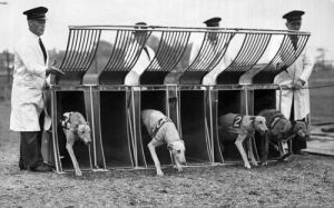 Greyhound racing, Birmingham 1950 by Mirrorpix