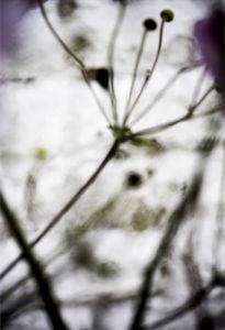 Vegetal 4174, 2008 by Laetizia Bazzoni