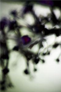 Vegetal  4218, 2008 by Laetizia Bazzoni