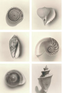 Shell Composition by Graeme Harris