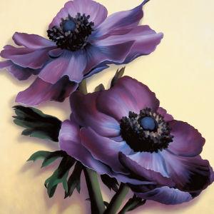 Purple Anemones by Rachel Deacon