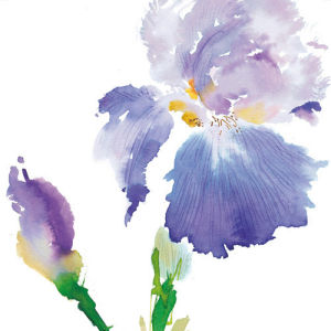Iris by Summer Thornton