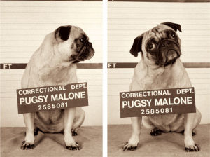 Pugsy Malone by Jim Dratfield