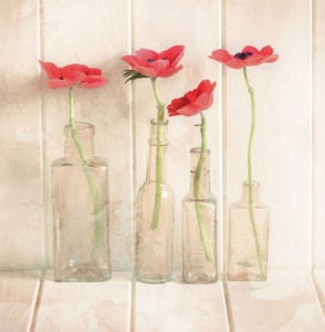 Anemones In Bottles by Ian Winstanley