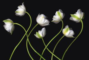 Seven Spring Greens by Harold Feinstein