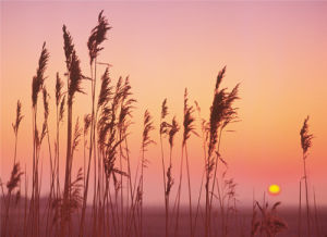 Fenland Sunrise by Rod Edwards