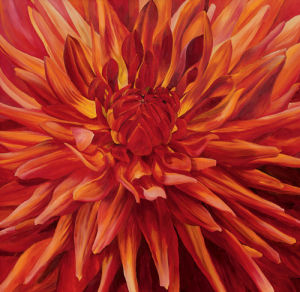 Fabulous Orange Dahlia by Sarah Caswell