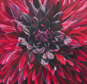Fabulous Black Wizard Dahlia by Sarah Caswell