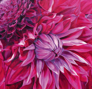 Fabulous Pink Dahlias by Sarah Caswell