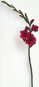 Red Gladioli by Kirsty Lorenz