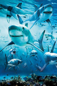 Shark Infested by Anonymous