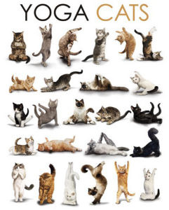 Yoga Cats - Compilation by Anonymous