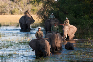 Elephant-back Safari, Abu Camp, Okavango Delta, Botswana by Sergio Pitamitz