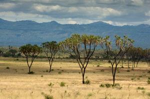 Meru National Park, Kenya by Sergio Pitamitz