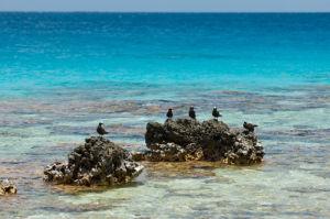 Bird Island, Tikehau, Tuamotu Archipelago, French Polynesia by Sergio Pitamitz