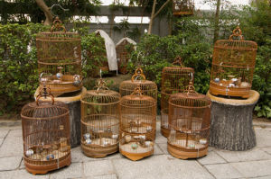 Bird Garden market, Mong Kok District, Kowloon, Hong Kong, China by Sergio Pitamitz