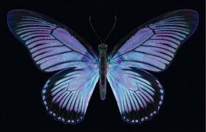 Great Blue Zalmoxis by Harold Feinstein