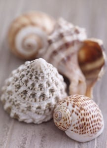 Shell Collection by Howard Shooter and Lauren Floodgate