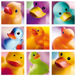 Duck Family Portraits by Ian Winstanley