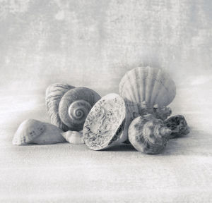 Still Life of Shells I by Ian Winstanley