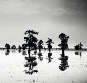 Cypress Swamp V by Josef Hoflehner
