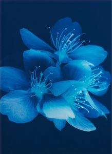 Blue Blossom by Lisa Barber