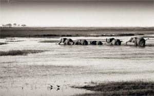 Chobe River Botswana by Philippe-Alexandre Chevallier