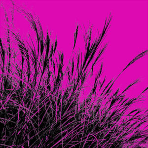 Grass (magenta), 2011 by Davide Polla