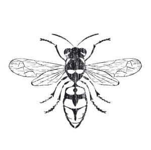Wasp by Clara Wells