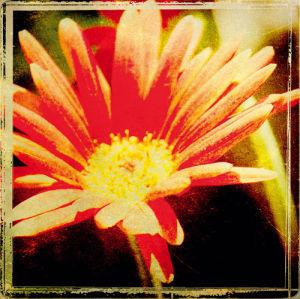 Vintage Garden III by Amie Mack