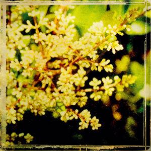 Vintage Garden V by Amie Mack