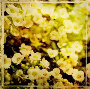 Vintage Garden VII by Amie Mack
