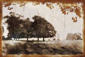 Tree Meadow II by Lucy Meadows