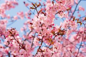 Blossom Haze by Joseph Eta