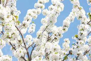 Blossom Sky by Joseph Eta