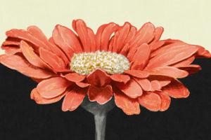 Apricot Flame I by Linda Wood