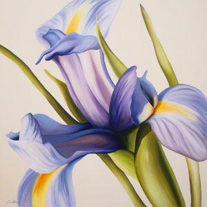 Iris Wind by Carolina Alotus