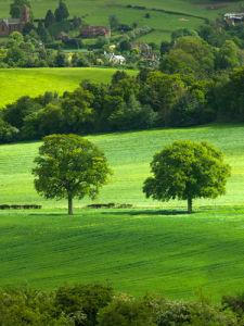 Grass Landscape 33 by Assaf Frank