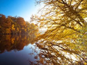 Autumn Trees 93 by Assaf Frank
