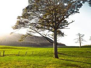 Lake District 67 by Assaf Frank