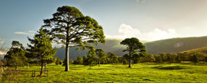 Lake District 70 by Assaf Frank