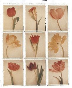 9 Tulips by Deborah Schenck