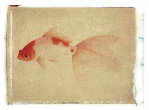 Fish 4 by Deborah Schenck